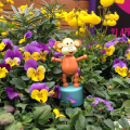 2015-0502-02 Flowers at Udderbelly