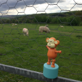 2015-0509-07 With sheep