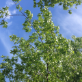 2015-0628-07 Sunbathing view