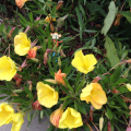 2015-0628-08 Gardening