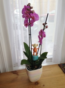 2015-0904-02 Purple orchid