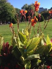 2015-10-04 Boston public gardens