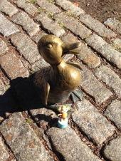 2015-10-06 Boston duck