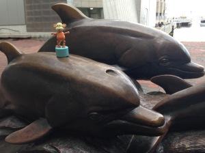 2015-10-19 Aquarium dolphins