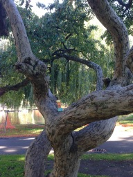 2015-10-25 Boston tree