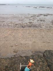 2015-1108 Low tide