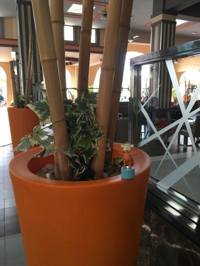 2016-0114-02 Orange plant pots.jpg