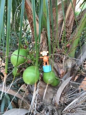 2016-0114-04 Coconut tree.jpg