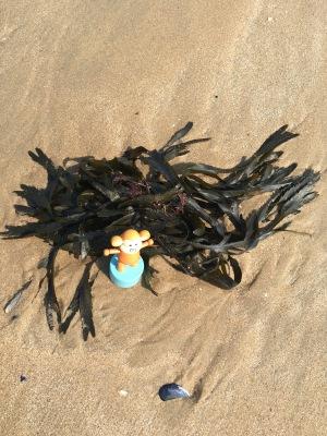 2016-0605-03 Seaweed.jpg