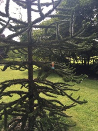 2016-0716-03 Quex Park.jpg