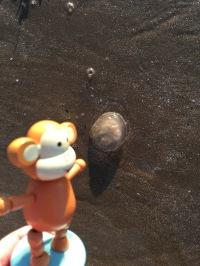 2016-0911-05 Jellyfish.jpg
