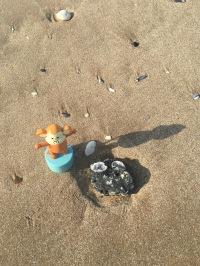 2016-0918-03 Shell on stone.jpg