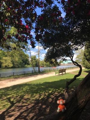 170514-11 Lake.jpg
