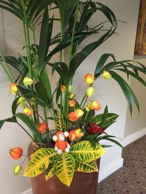 170624-01 Orange plant.jpg
