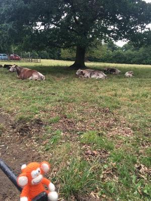 170624-02 Cows.jpg