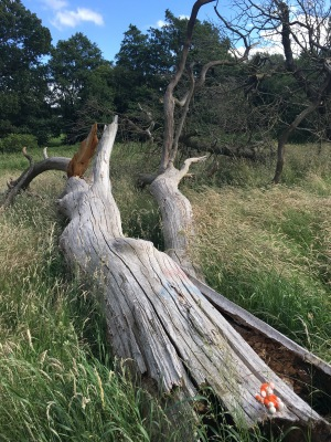 170624-06 Tree trunk.jpg