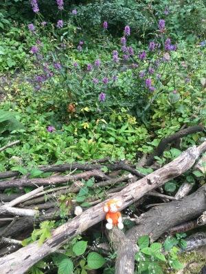 170706 Woodlands.jpg