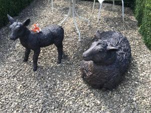 170902-06 Sheep.jpg