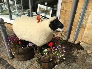 170902-09 Sheep.jpg